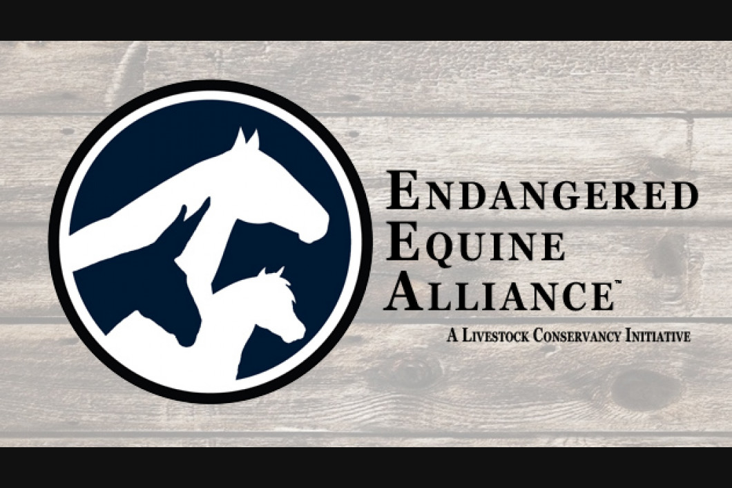 The Endangered Equine Alliance